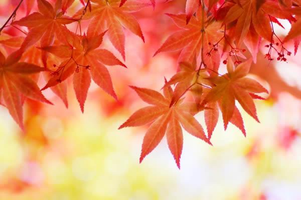 紅葉を名古屋の近場で楽しむ!プチドライブにおすすめスポット5選