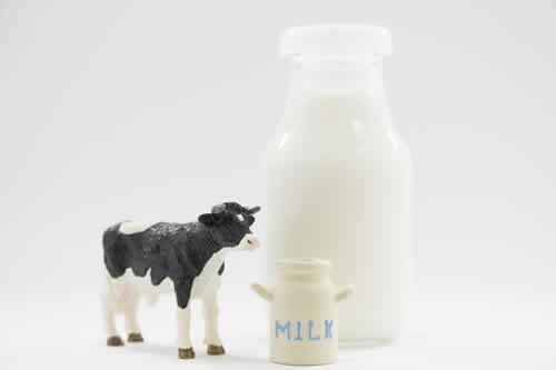 乳製品がカプサイシンを溶かす